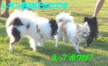 DSC_54622.jpg