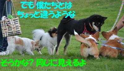 DSC_6228.jpg