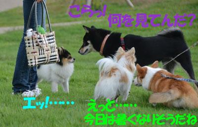DSC_6230.jpg