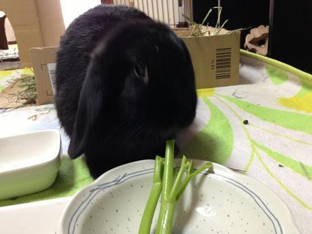 明日葉の茎を食べる