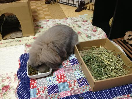 やっぱり牧草よりペレット?