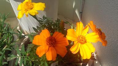 何の花だっけか・・・