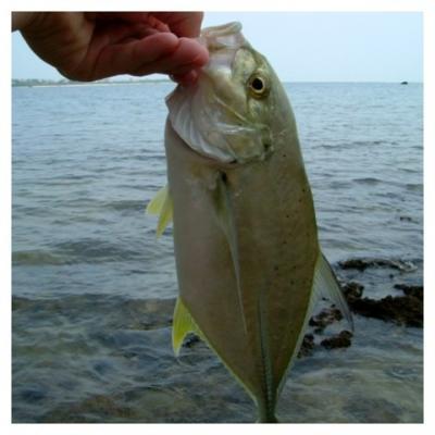 沖縄で釣ったデカイメッキ