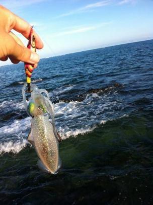 沖縄で釣ったアオリイカ2