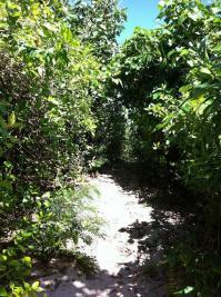ジャングルの道2