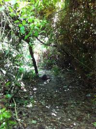 ジャングルの道