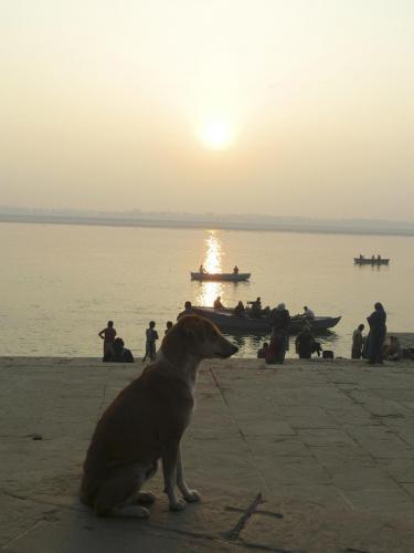 ガンジスの朝日と犬