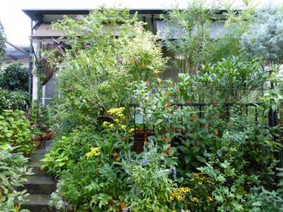 雨の庭 2013 9・2