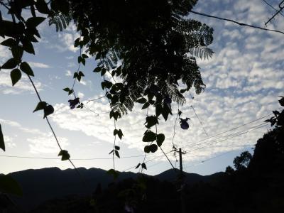 秋の空に青いスイートピー 2013 10・2