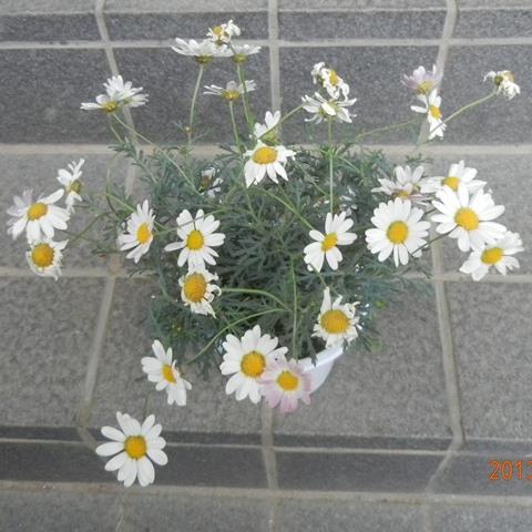 Marguerite130512.jpg