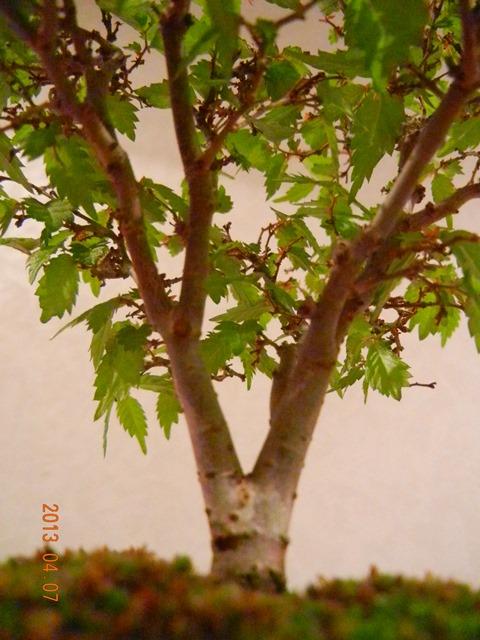 keyakiN_130407a.jpg