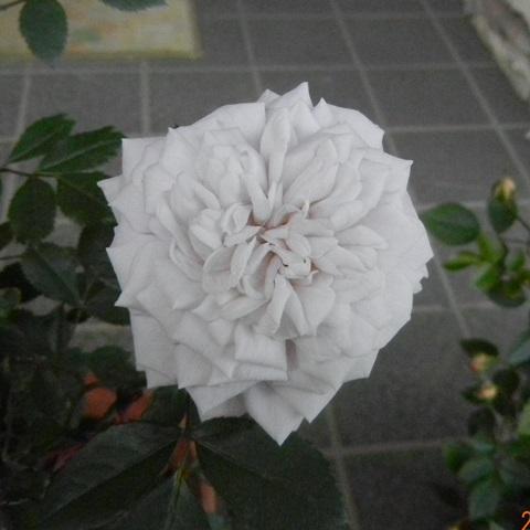 minibarakocha130512.jpg