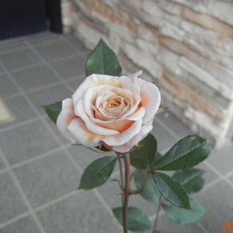 minibarakocha130512a.jpg