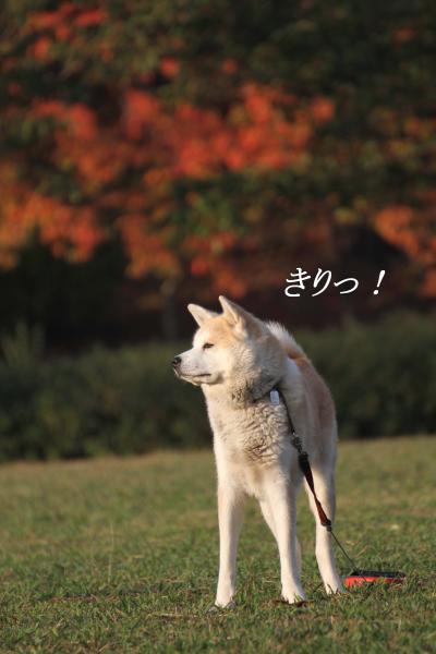 IMG_8483a_convert_20121116215456.jpg