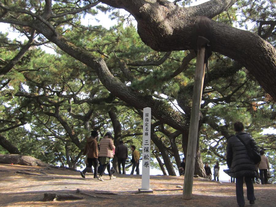 2014-12-7三保の松原IMG_8538