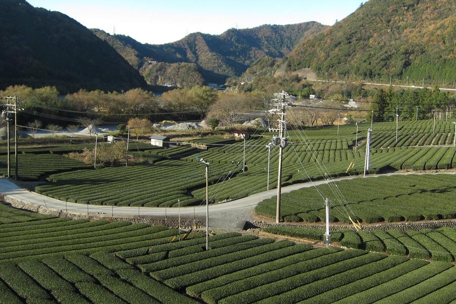 2014-12-7静岡IMG_8565