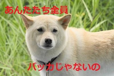 IMG_63021.jpg