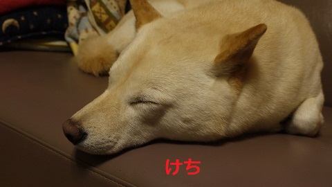 P1120882.jpg