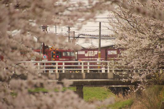 130324桜鉄 (64)のコピー