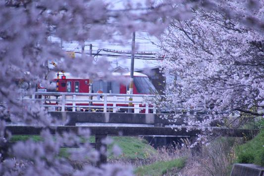 130324桜鉄 (53)のコピー