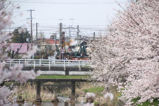 130324桜鉄 (23)のコピー