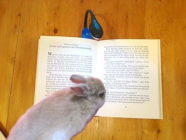 本を読むフォーンくん2