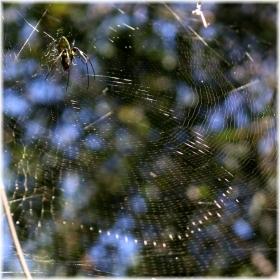 131027E 006蜘蛛巣