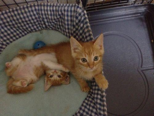 タンタン仔猫09写真