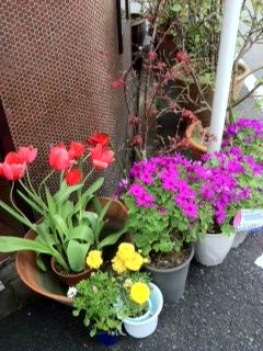 0421花