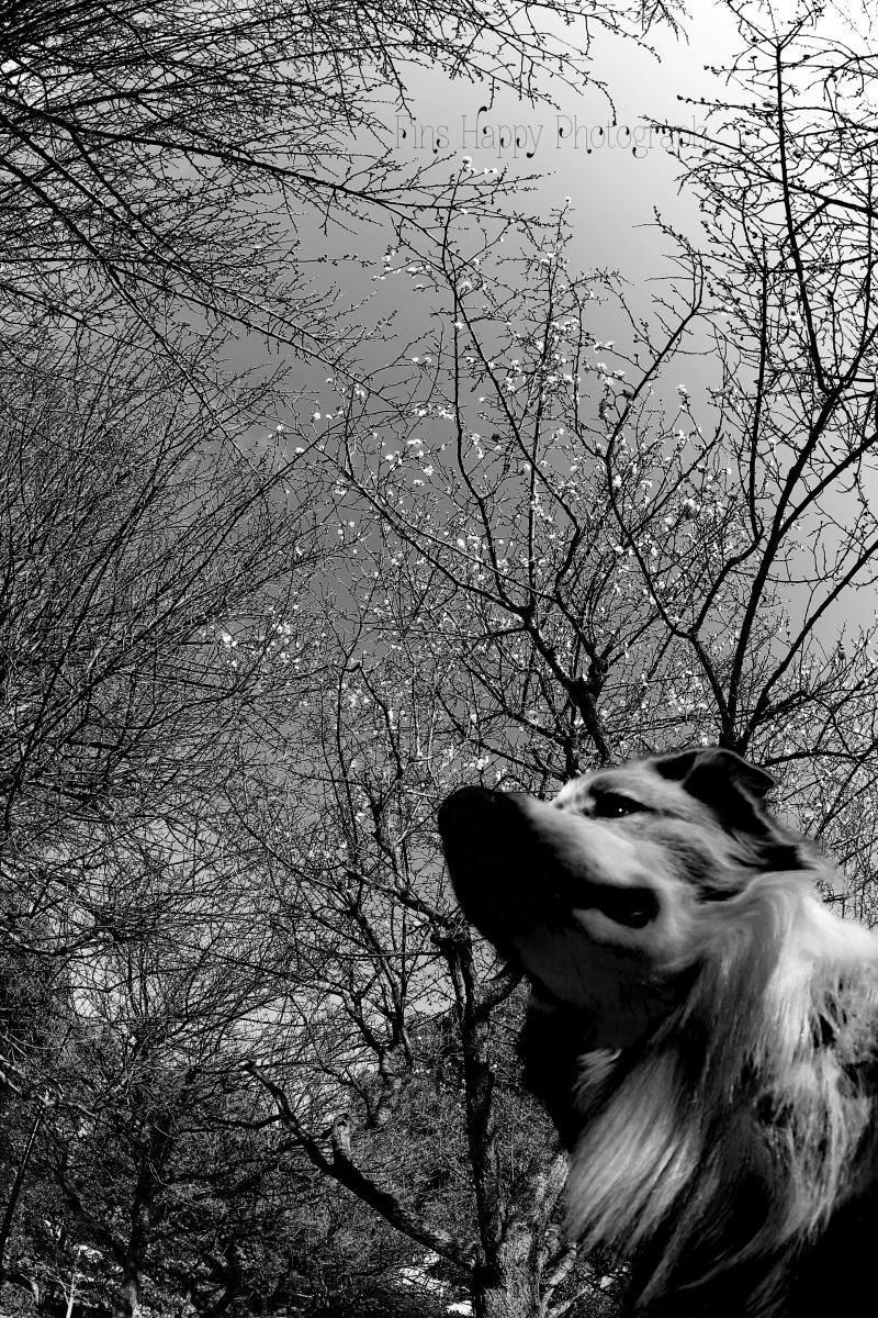 雪空に花ほころぶ