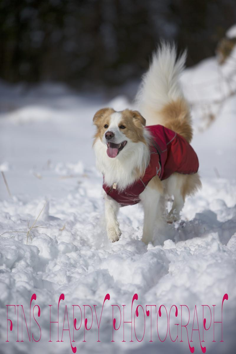 こんな雪はじめて!2