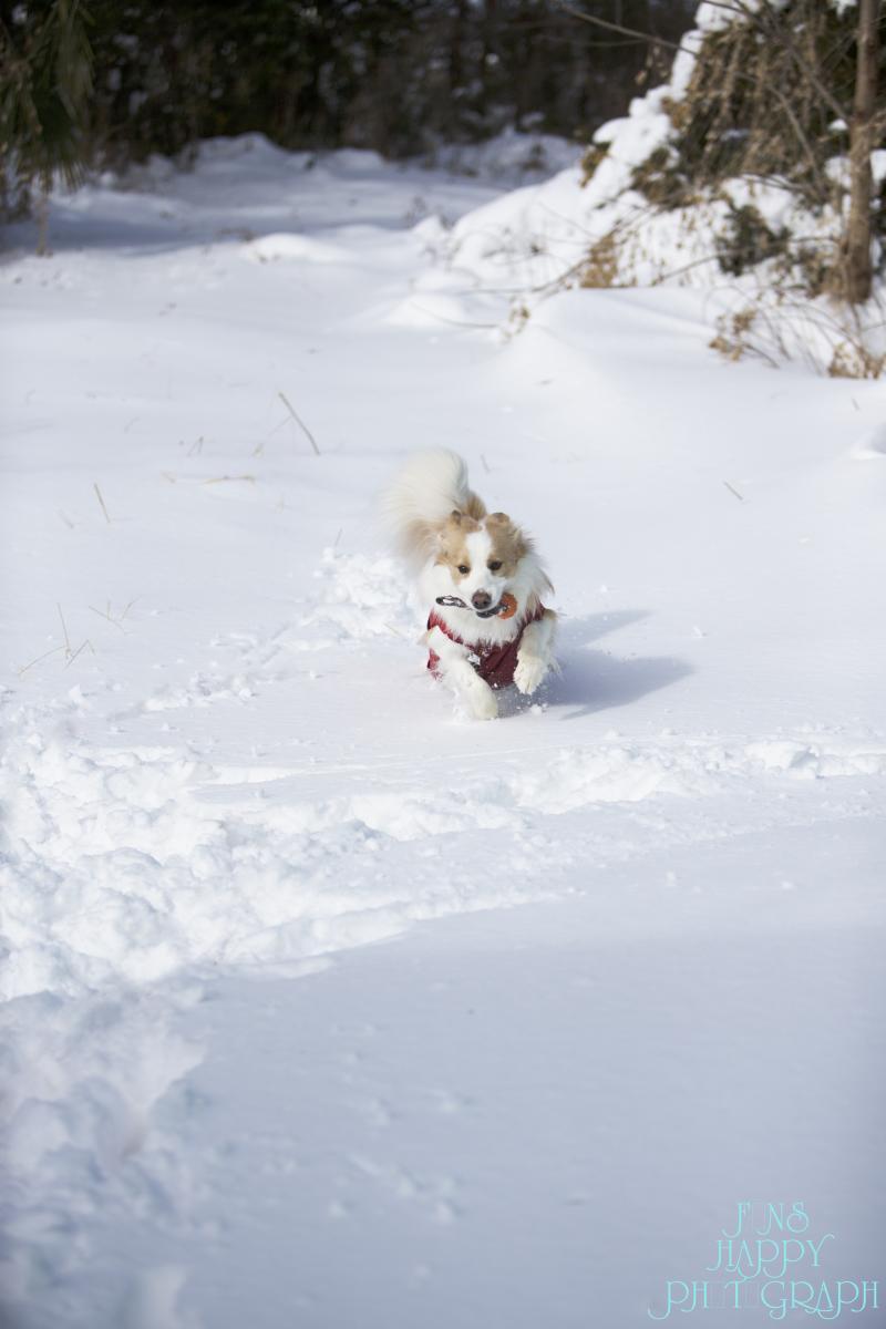 全開バリバリ!雪遊び