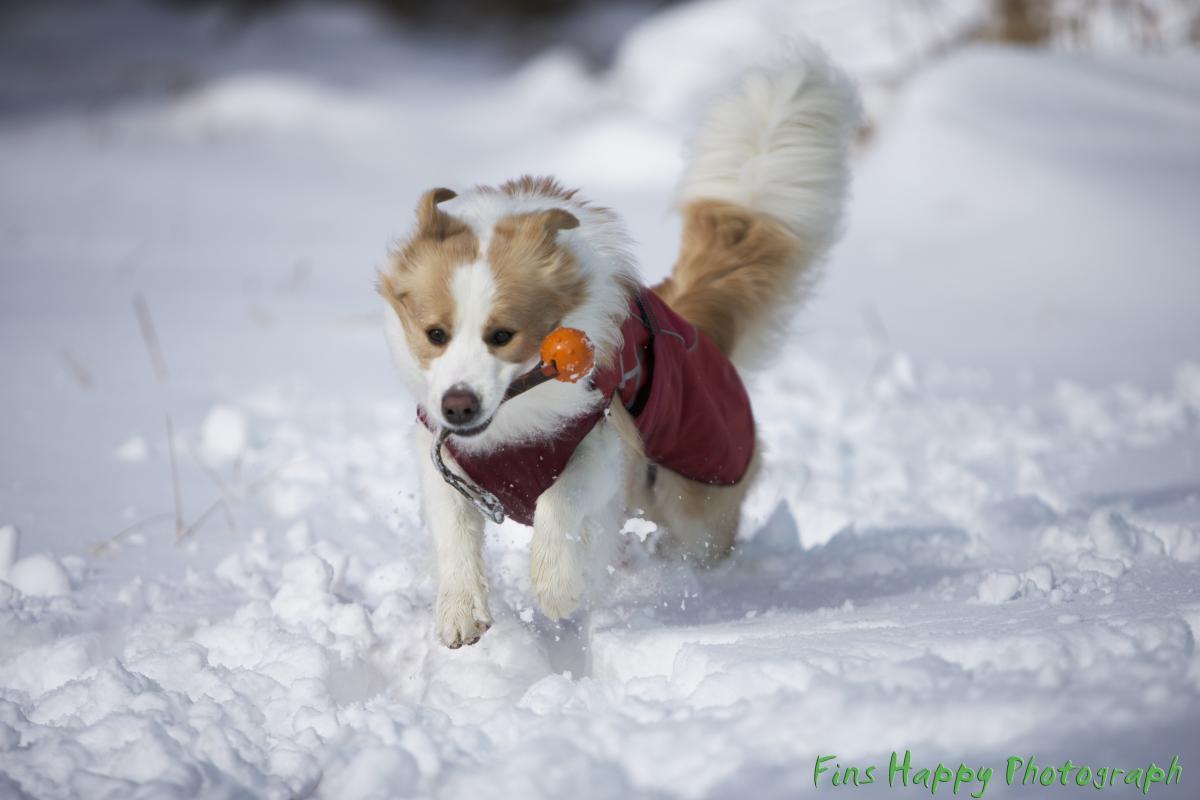 全開バリバリ!雪遊び2