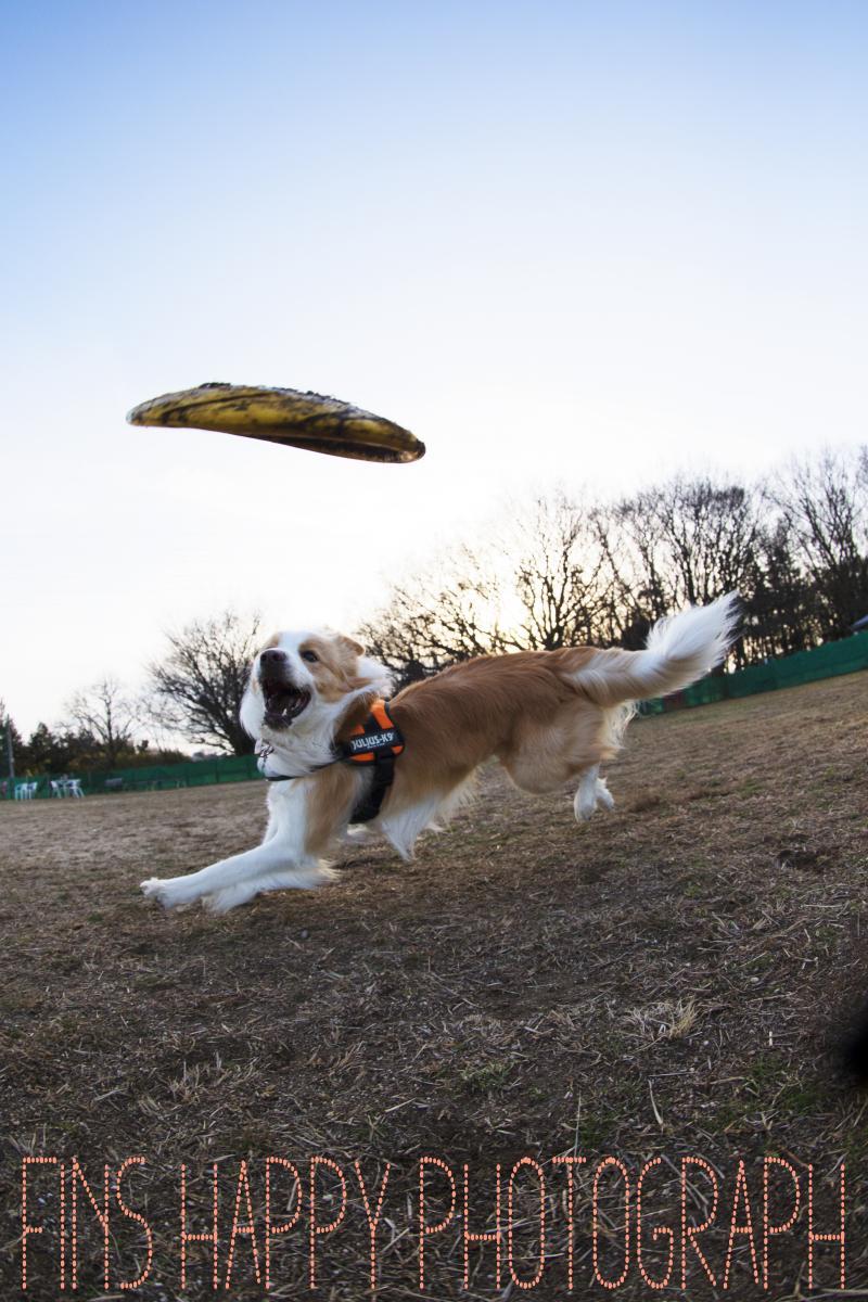 UFO撮ったど~!