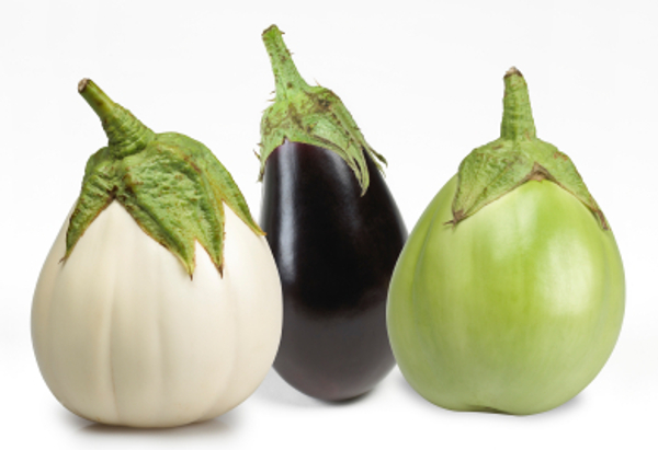 eggplant1comaci騙し神憑紀茄子美白仁黑仁応仁朕co