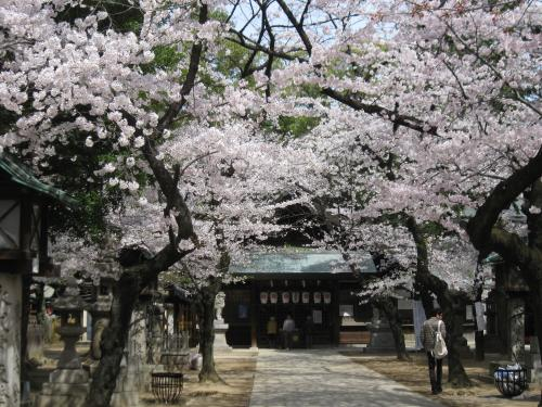 2013那古野神社の桜2