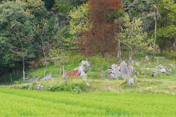 130423秋吉台への途中石灰岩