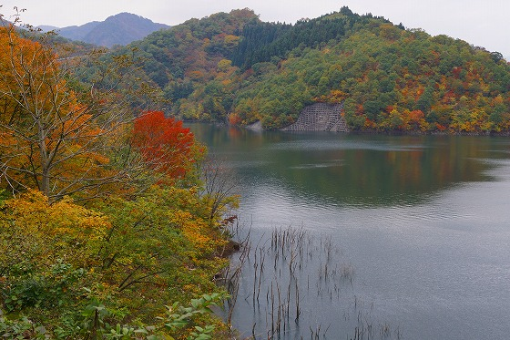 131106徳山湖-1