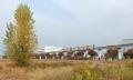 昭和記念公園紅葉2014 (1)