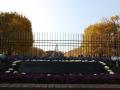 昭和記念公園紅葉2014 (3)