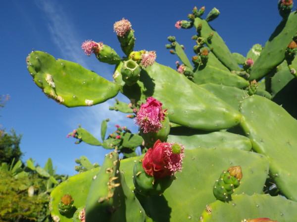 20111119_Oaxaca_01.jpg