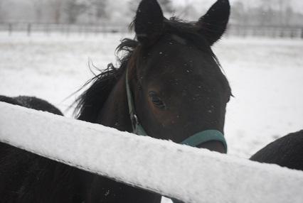 11・雪・黒ピサ