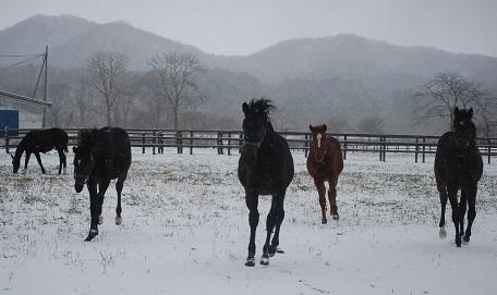 11・雪・牝馬向かってくる