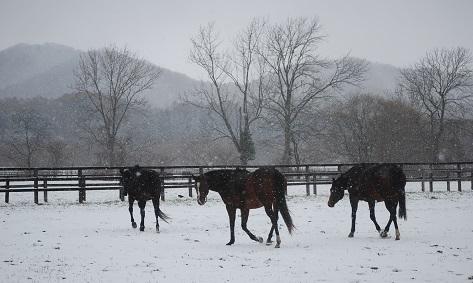 11・雪・繁殖牝馬たち