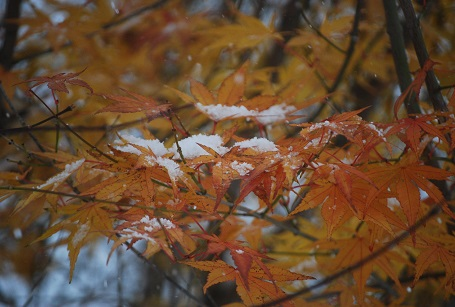 11・雪・名残りの紅葉