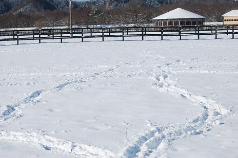 12・雪・雪上の足跡