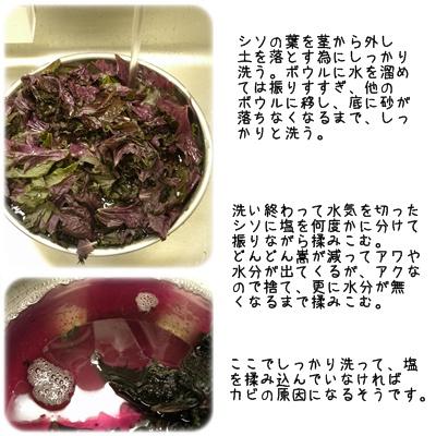 梅干し(紫蘇漬け①)