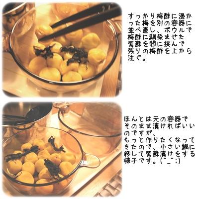 梅干し(紫蘇漬け②)