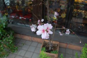 2013年3月18日 洋菓子店前