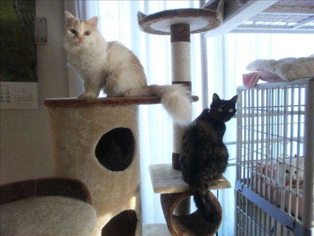cat tower